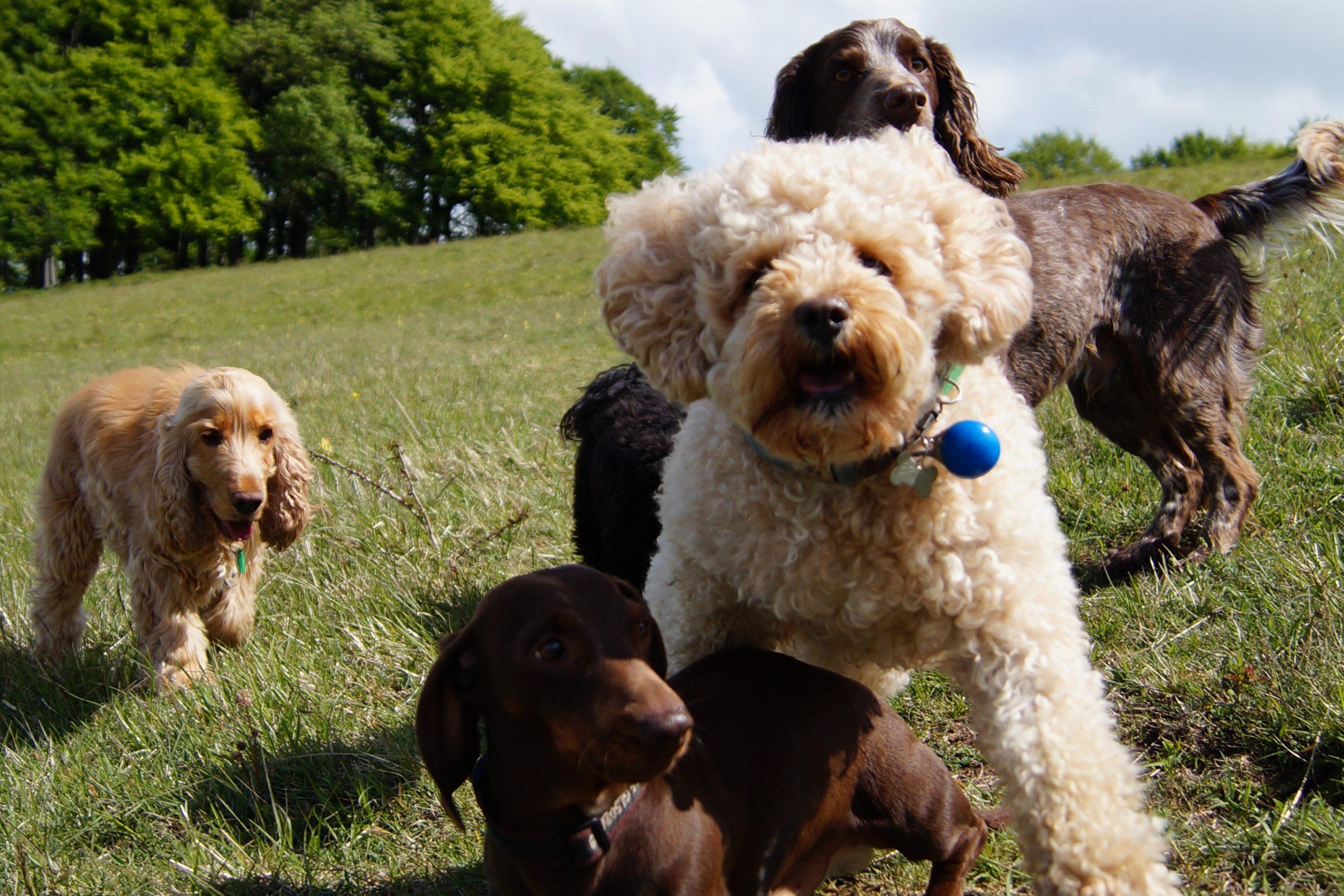 Dog Day Care and Training - Walks