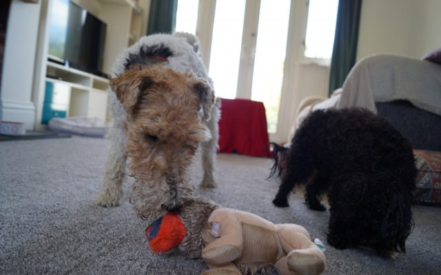 Bright Eyes Dog Care and Training - Play 3