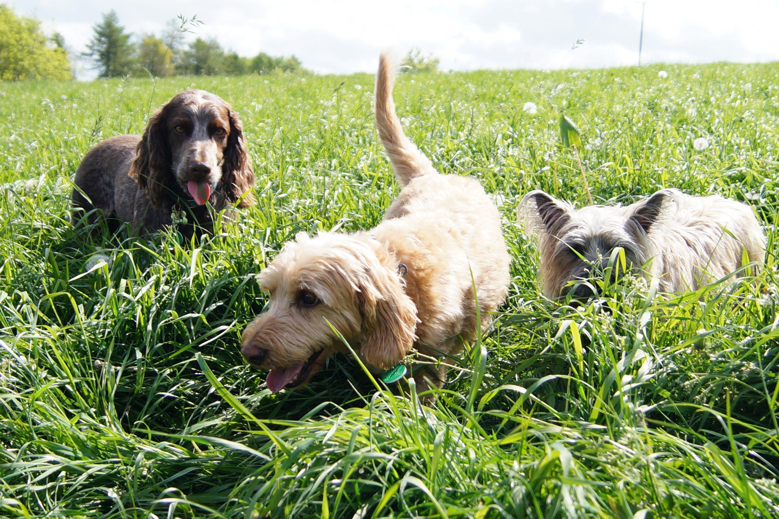 Bright Eyes Dog Day Care Dog Training - Walking