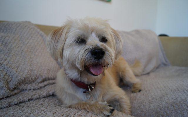Bright Eyes Dog Care and Training - happy dog