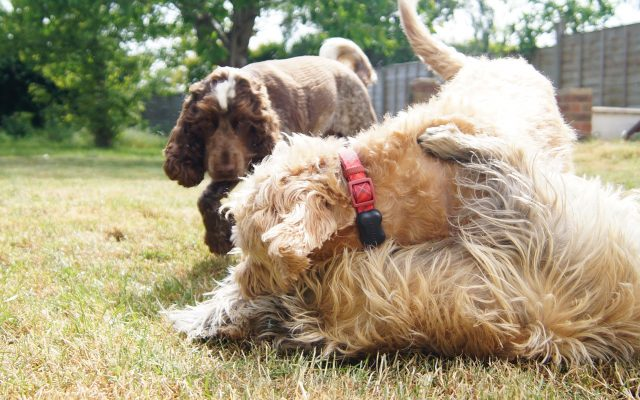 Bright Eyes Dog Care and Training - Garden 4