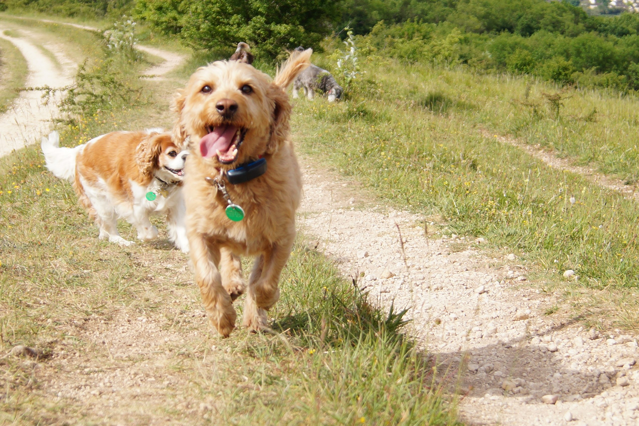 Bright Eyes Dog Day Care - Running