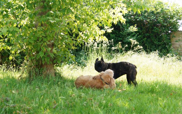 Bright Eyes Dog Care and Training - Garden 7