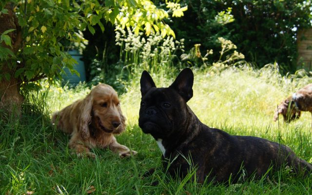 Bright Eyes Dog Care and Training - Garden 5