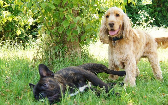 Bright Eyes Dog Care and Training - Garden 3