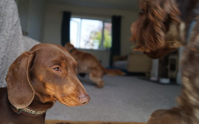 Bright Eyes Dog Care and Training - relaxed