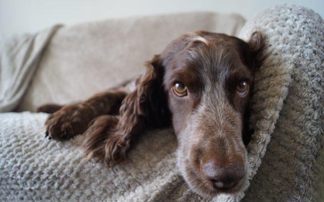 Bright Eyes Dog Care and Training - Sleeping 5