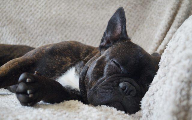 Bright Eyes Dog Care and Training - Sleeping 2