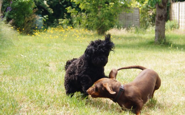 Bright Eyes Dog Care and Training - Garden 1