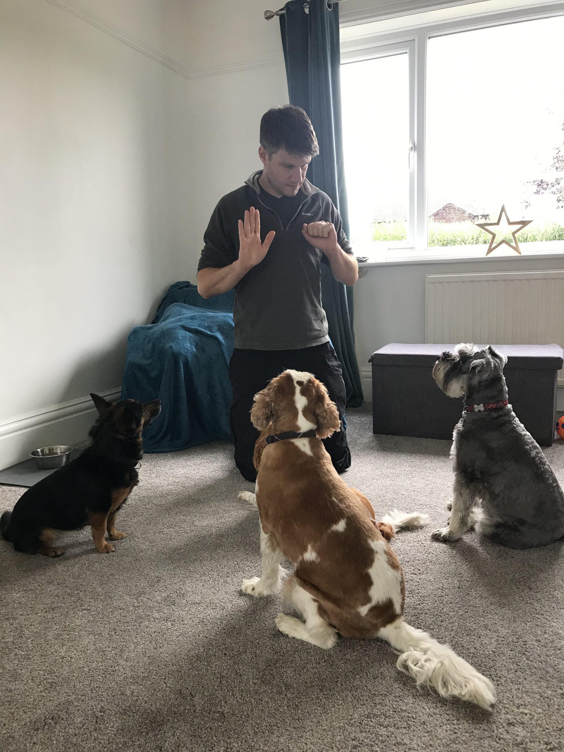 Bright Eyes Dog Training